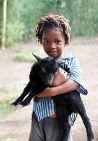 Goat_lrgb